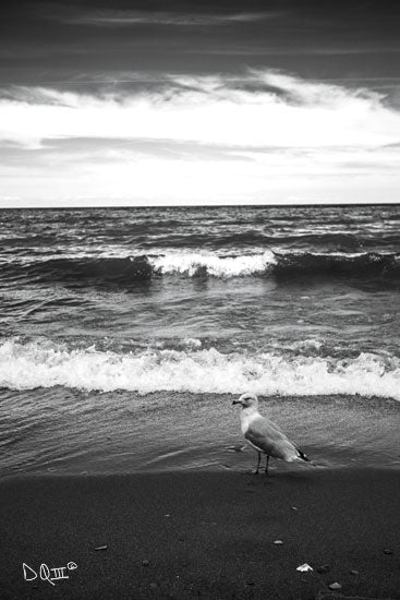 Donnie Quillen DQ154 - DQ154 - Seagull II    - 12x18 Photography, Black & White, Coastal, Seagull from Penny Lane