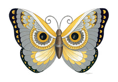 DS1752 - Owl Butterfly - 16x12