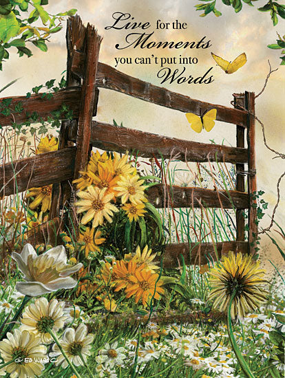 Ed Wargo ED379 - Live for the Moments Flowers, Daisies, Fence, Moments, Wildflowers from Penny Lane