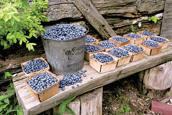 Irvin Hoover HOO122 - HOO122 - Blueberries Picked - 18x12 Blueberries, Bucket, Still Life, Fruit Stand, Fruit, Kitchen from Penny Lane