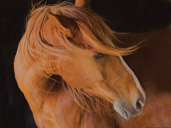 JG Studios JGS268 - JGS268 - Beautiful Mane - 16x12 Horse, Portrait, Photography from Penny Lane