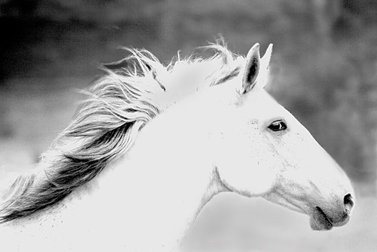 JG Studios JGS294 - JGS294 - Mane in the Wind - 18x12 Photography, Horse, Black & White, Portrait from Penny Lane