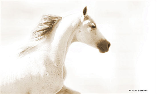 Kari Brooks KARI101 - Dash I - 18x12 Photography, Horse, White Horse, Portrait from Penny Lane
