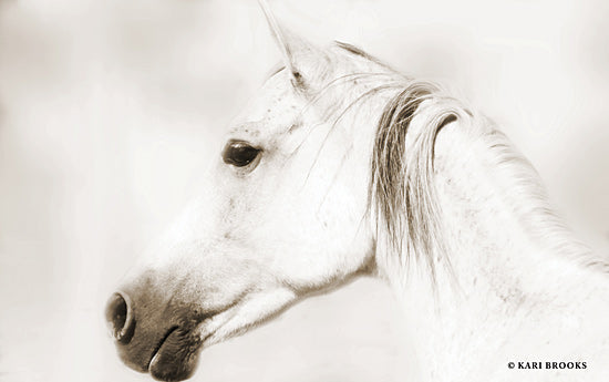 Kari Brooks KARI126 - KARI126 - Dash IV - 18x12 Horse, White Horse, Photography, Portrait from Penny Lane