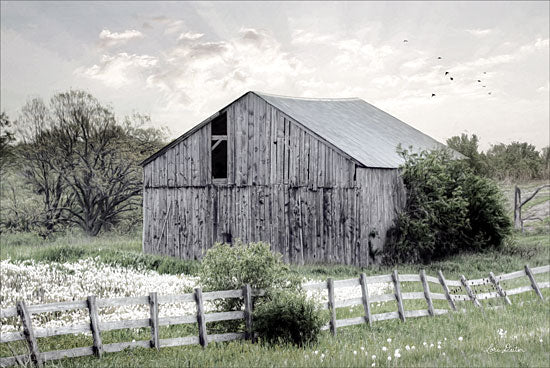 Lori Deiter LD1275 - Barnsville Barn Barn, Farm, Field, Rustic, Trees from Penny Lane