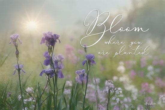 Lori Deiter LD1325 - Bloom Where You are Planted Bloom, Purple Flowers, Wildflowers from Penny Lane