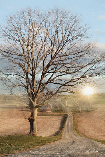 Lori Deiter LD1329 - Born and Raised Tree, Road, Path, Sun, Nature from Penny Lane