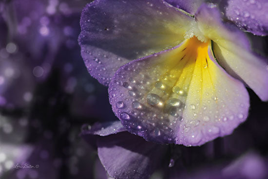 Lori Deiter LD1374 - Purple Pansy Flowers, Purple, Dew, Weather, Pansy from Penny Lane
