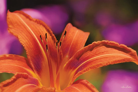 Lori Deiter LD1389 - Floral Pop V Flower, Orange Flower, Bloom from Penny Lane