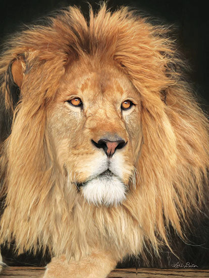 Lori Deiter LD1403 - King of the Jungle Lion, Portrait, Photo from Penny Lane