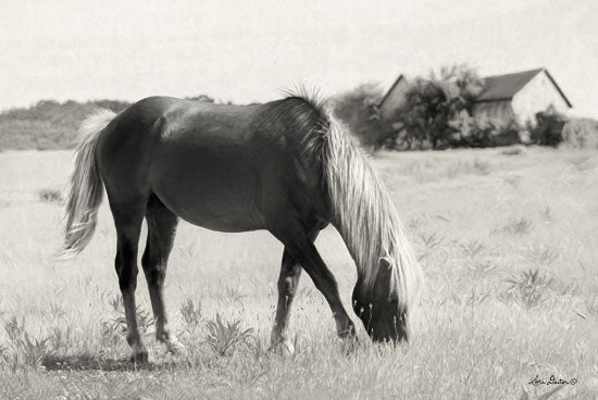 Lori Deiter LD1410 - Summer Grazing Horse, Field, Grazing, Black & White from Penny Lane