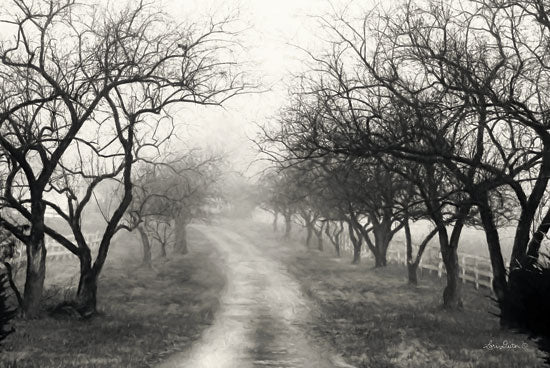 Lori Deiter LD1412 - Foggy Lane Road, Path, Trees, Foggy, Weather, Black & White from Penny Lane