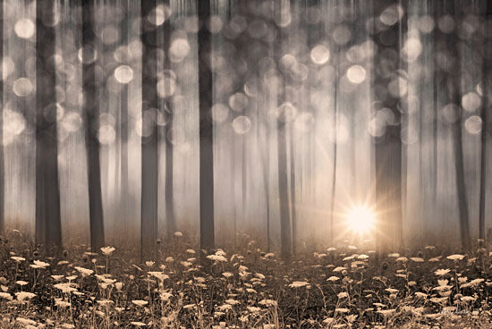 Lori Deiter LD1417 - Enchanted Morning Wildflowers, Trees, Forest, Enchanted, Sunlight from Penny Lane