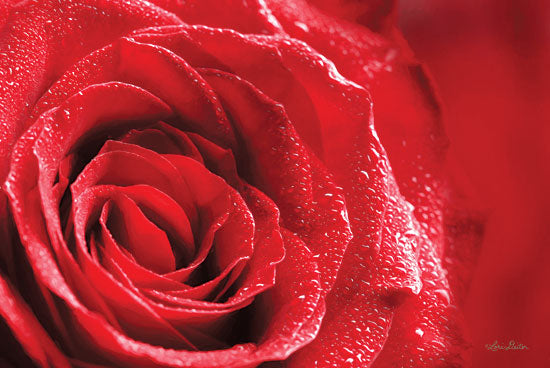 Lori Deiter LD1442 - Red Rose After Rain Rose, Red, Portrait, Closeup, Rain from Penny Lane
