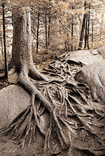 Lori Deiter LD1525 - Strong Roots - 12x18 Trees, Forest, Roots, Rock, Photography from Penny Lane