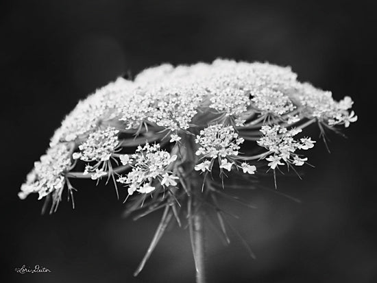 Lori Deiter LD1798 - LD1798 - Queen Anne's Lace - 16x12 Queen Anne's Lace, Black & White, Weeds from Penny Lane