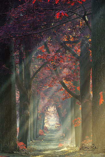 Martin Podt MPP430 - Path of Happiness Path, Trees, Red Flowers, Red Leaves, Sunlight, Sunbeams from Penny Lane