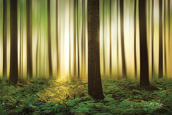 Martin Podt MPP433 - Forest in Motion Trees, Ferns, Sunlight, Forest from Penny Lane