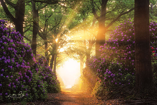 Martin Podt MPP439 - Kaboom Trees, Path, Purple Flowers, Flowers, Sunlight, Sunbeam from Penny Lane