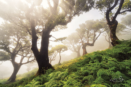Martin Podt MPP461 - Just Some Trees on a Hill  - 18x12 Trees, Forest, Ferns, Botanical from Penny Lane