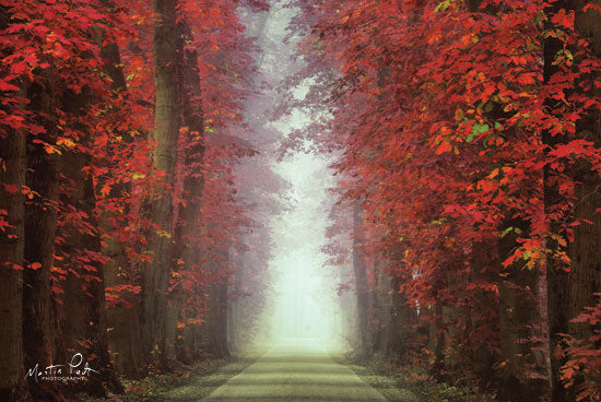 Martin Podt MPP464 - In Love with Red Trees, Red Leaves, Autumn, Path, Sunlight from Penny Lane