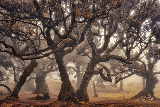 Martin Podt MPP485 - MPP485 - The Hidden Truth      - 18x12 Landscape, Trees, Photography from Penny Lane