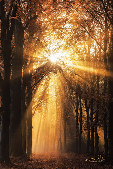 Martin Podt MPP506 - MPP506 - Sunburst     - 12x18 Trees, Fall, Sunburst, Sun Rays, Pathway, Photography from Penny Lane
