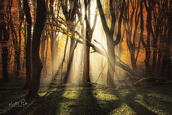 Martin Podt MPP561 - MPP561 - The Awakening - 18x12 Trees, Forest, Sunlight, Moss, Photography from Penny Lane