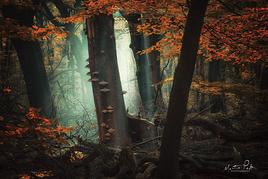 Martin Podt MPP562 - MPP562 - Beautiful Mess - 18x12 Trees, Forest, Autumn, Leaves, Path, Photography from Penny Lane