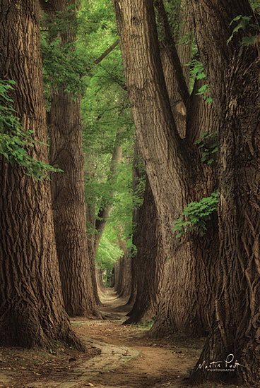 Martin Podt MPP568 - MPP568 - Roads were Made for Journeys - 12x18 Trees, Pathway, Sunlight, Photography from Penny Lane