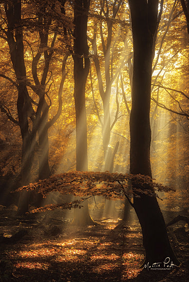 Martin Podt MPP570 - MPP570 - The Umbrella - 12x18 Trees, Falling Leaves, Fall, Sunlight, Photography from Penny Lane