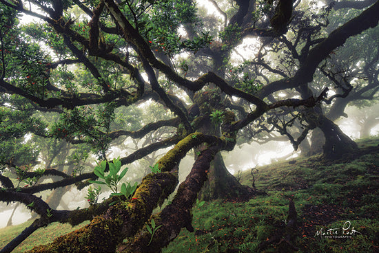 Martin Podt MPP575 - MPP575 - Tentacles - 18x12 Trees, Landscape, Photography from Penny Lane
