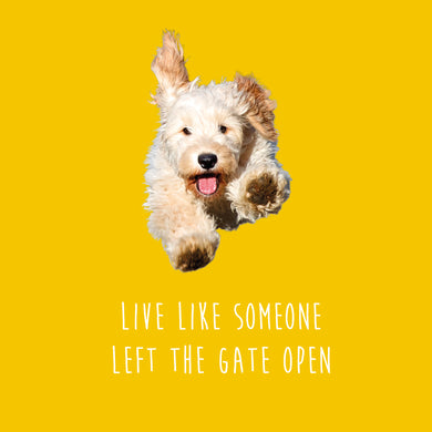 Live Like Someone Left the Gate Open (Cockerpoo)