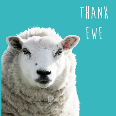 Thank Ewe (Sheep)