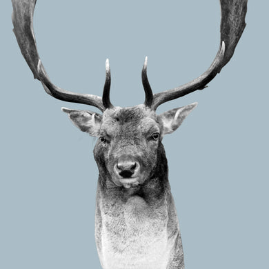 Victor (Stag)
