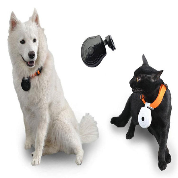 Dog / cat collar with mini camera