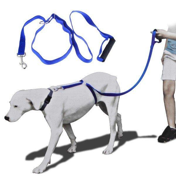 TRAIN - training dog leash