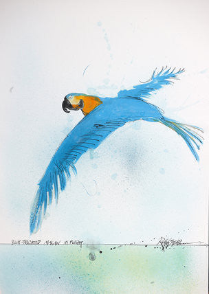 Ralph Steadman Nextinction Blue Throated Macaw Signed Print