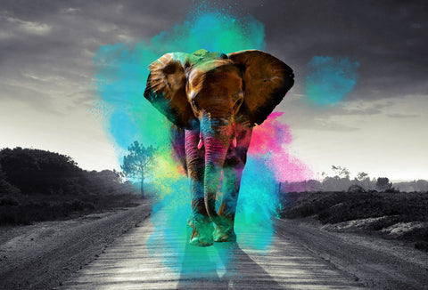 Canvas Design - Elephant