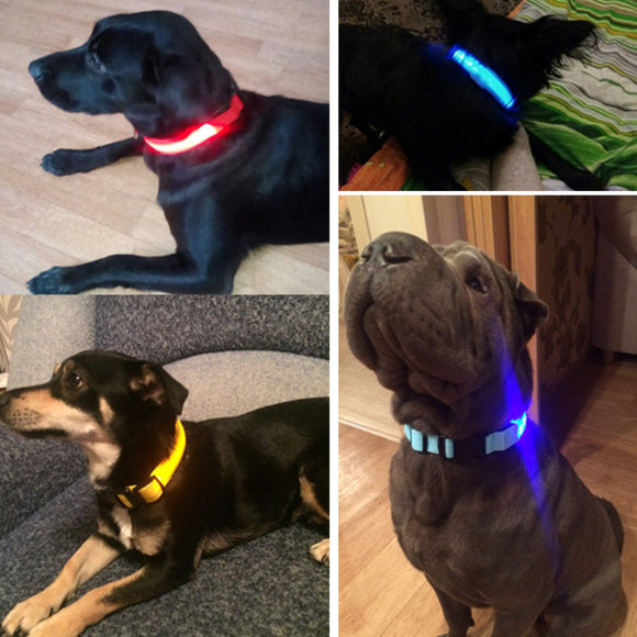 LED Dog Collar - Night Safety Flashing Glow In The Dark Dog Leash FREE GIFT