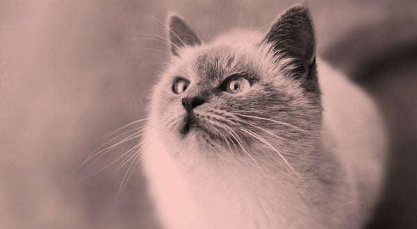 Feline Body Language: 8 Signs Your Cat Is Happy