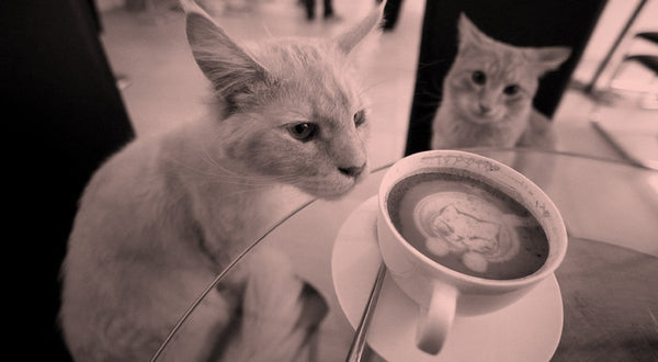 If You Love Cats & Coffee, Cat Cafes Are Your Purrfect Date