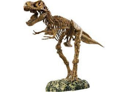 Animal Planet – Tyrannosaurus Rex Skeleton - Educational Resources