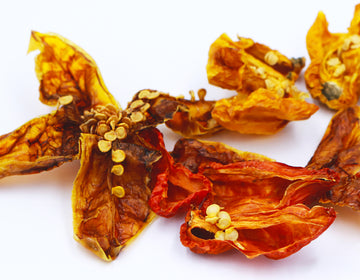 DRIED SCORPION CHILLI (5g)
