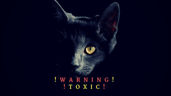 Warning: Toxic Holiday Plant For Our Pets