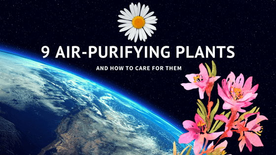 9 Air-Purifying Plants And How To Care For Them