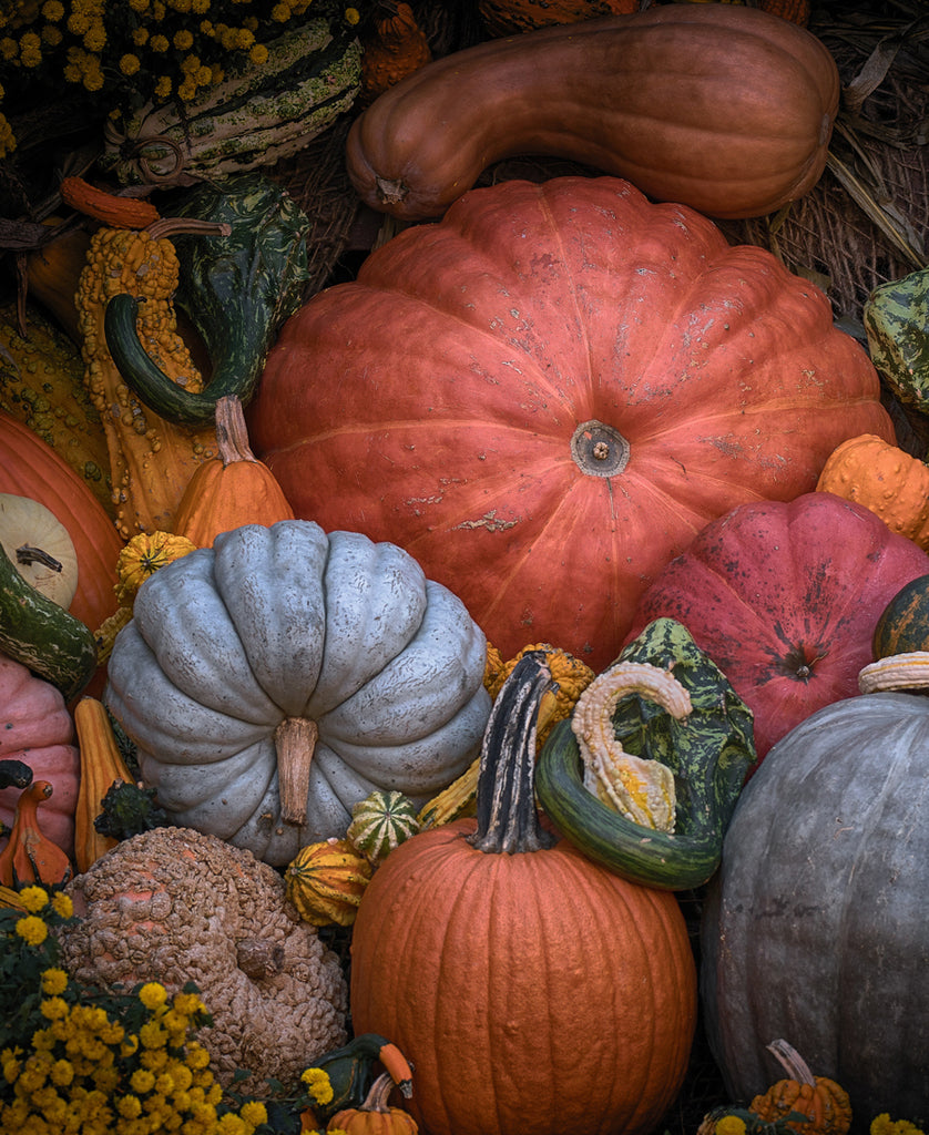 Various Pumpkins in Shapes, Colors, and Sizes