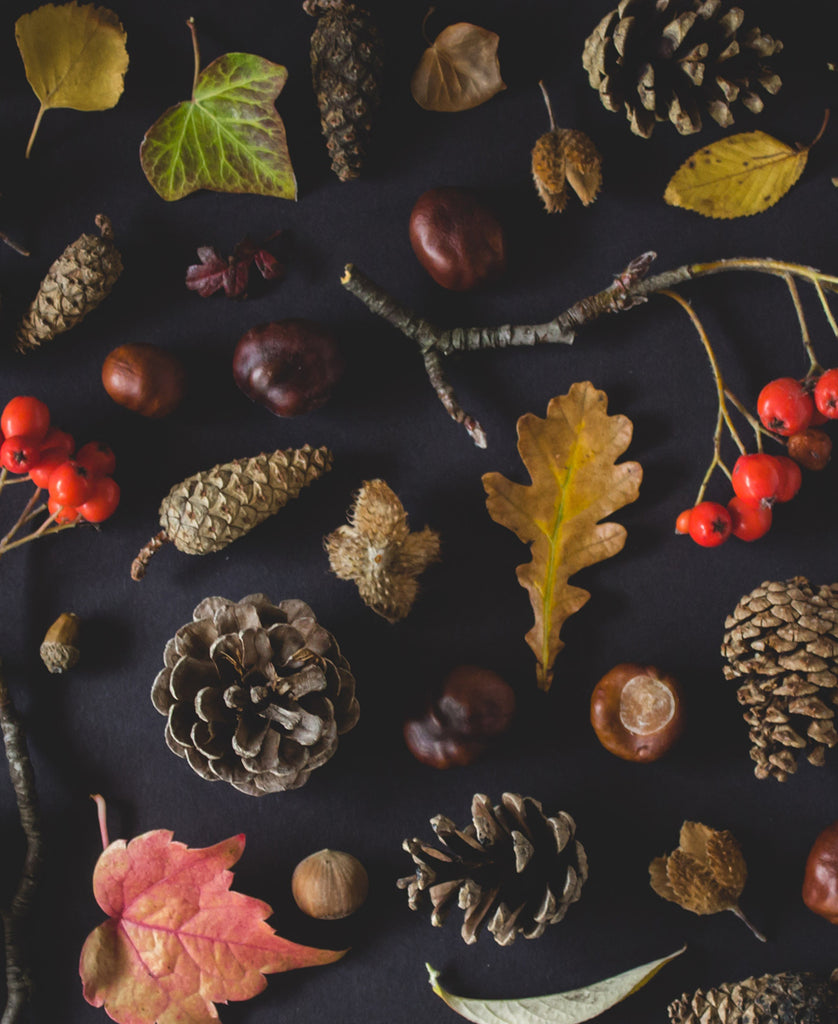 Acorns, Leaves and Berries on Table