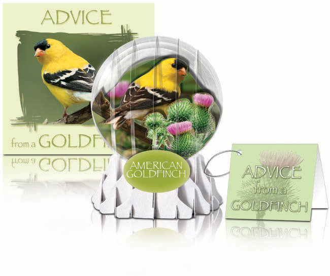 goldfinch greeting card,goldfinch birthday card,bird lover birthday card,birder card