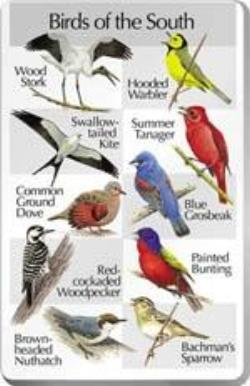 Birds of the South SongCard - For Classic IdentiFlyer and Singing AlarmClock